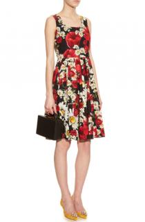 Dolce & Gabbana Poppy & Daisy-print Cotton Dress